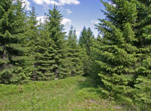 Stortinget innarbeidet skogen i klimaloven