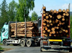 Veikart for treforedlingsindustrien