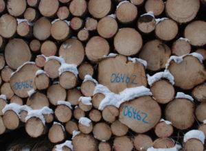 Orientering om skogbeskatningen