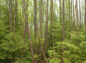 Ny skogeier?