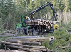 Bærekraftstempel kan glippe for norsk skog