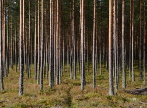 Støtte til skogideer