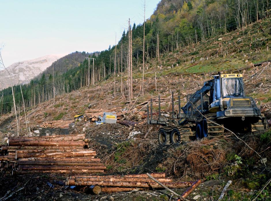 I hele det 150 dekar store feltet ble det tatt ut 10.400 kubikkmeter med 50 år gammelt tømmer.