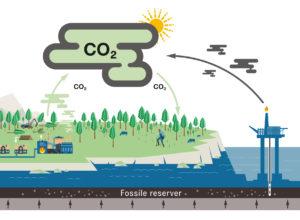 Nytt hefte om skogens rolle i klimasammenheng