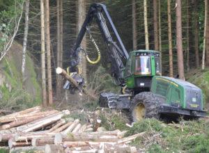 Vil ha skogpakke for å sikre aktivitet