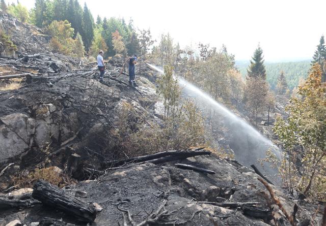 Etterslokking av skogbrann. Foto: Roar Ree Kirkevold.
