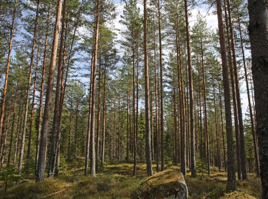 Glommen og Mjøsen ønsker å jobbe sammen for skogeiernes beste.