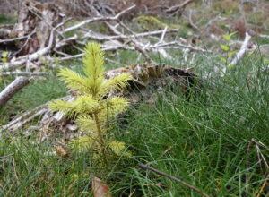 Planting av skog er en del av klimaløsningen