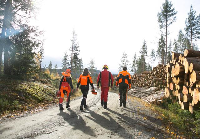 Siste skrik i skogen Norges Skogeierforbund