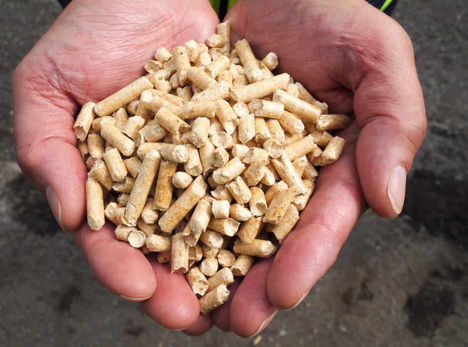 Det forventes en massiv markedsutvikling for trepellets globalt. Foto: Moelven