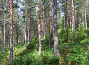 Blir du svar skyldig om miljøinformasjon?