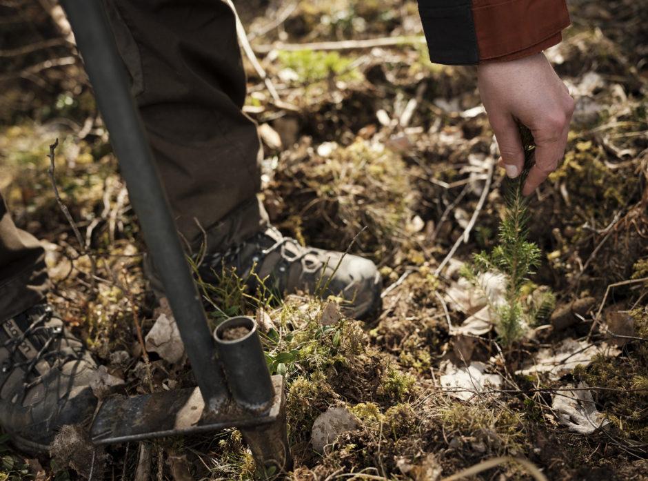 Planting av skog.