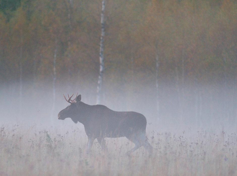 Jegernes observasjoner har stor betydning for overvåkning og forvaltning av hjorteviltet. Foto: Shutterstock