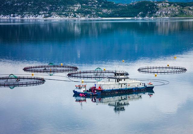 Trefiber kan i framtiden brukes som fiskefôr i oppdrettsnæringen i Norge.