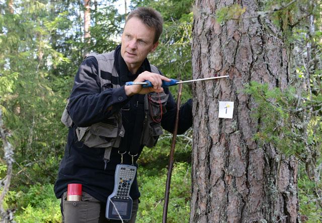 Knut Ole Viken, NIBIO, klaver et tre på en av Landsskogtakseringens flater i våre dager.