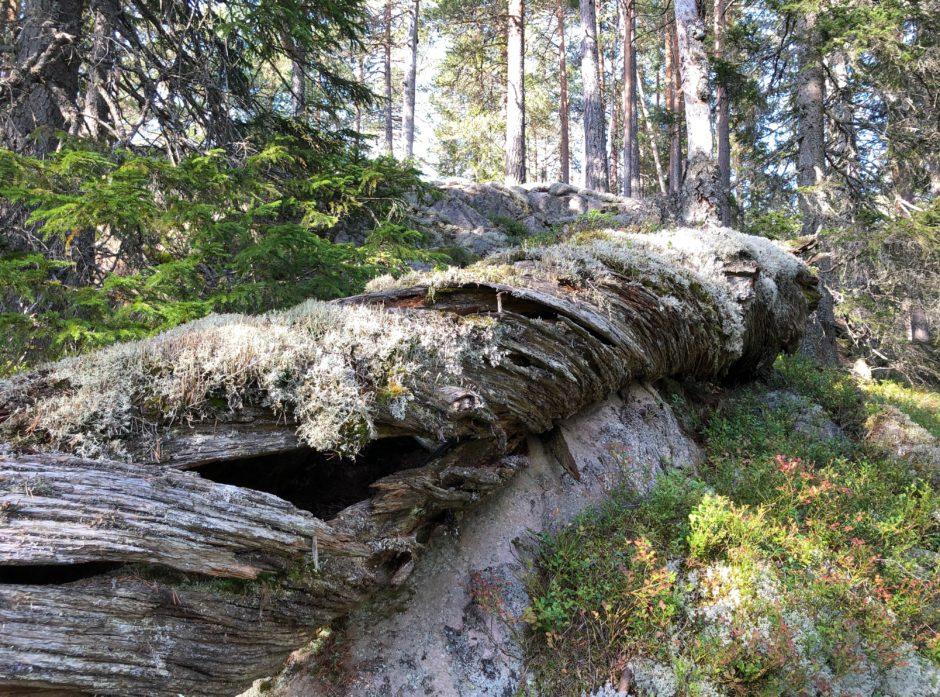 Foto: Svein M. Søgnen