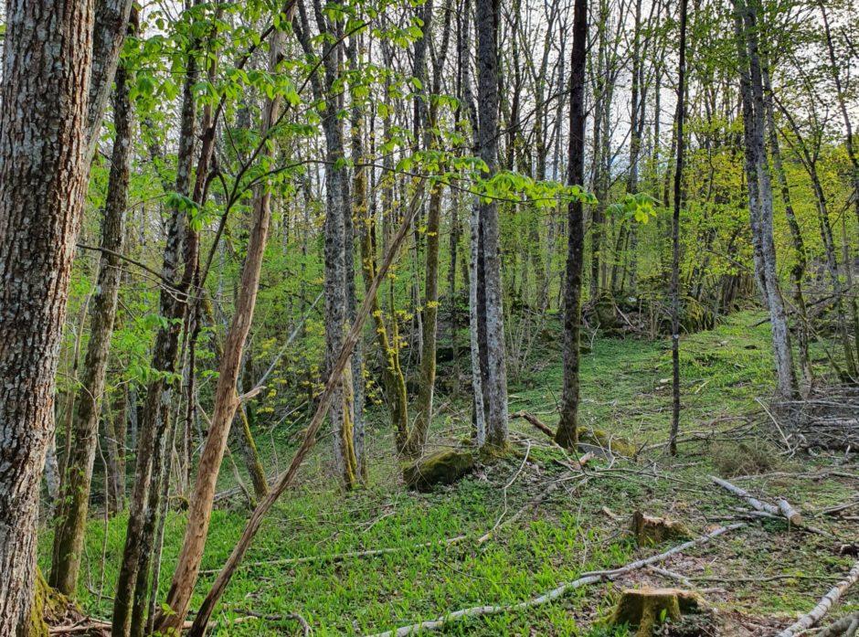 Skjøtsel av nøkkelbiotop med rik bakkevegetasjon og edelløvtrær. Foto: Hans Asbjørn Kårstad Sørlie