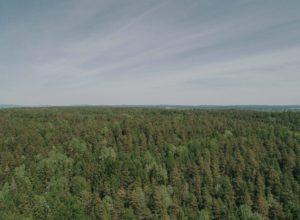 Vil forsikre mer trøndersk skog