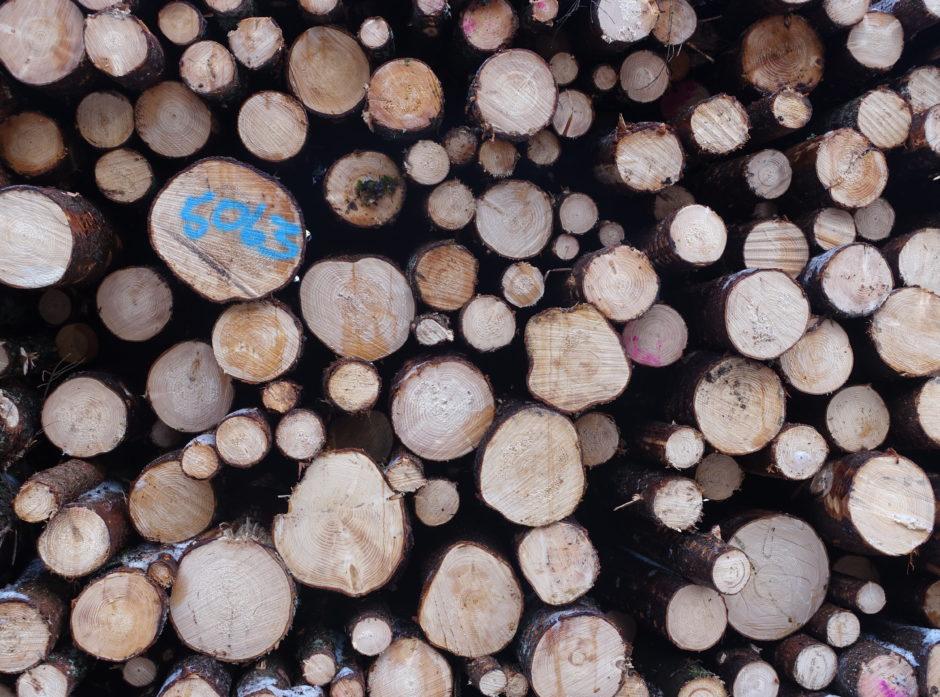 Hvis StoraEnso øker kapasiteten så kraftig, så kan norske skogeiere få levert mer massevirke. Men, hva med vår egen  trebaserte industri? Illustrasjonsfoto: Roar Ree Kirkevold