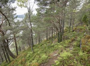 – Frivillig vern er en god løsning når det er vanskelig å drive skogen