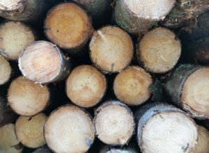Skogforvaltning basert på forskning