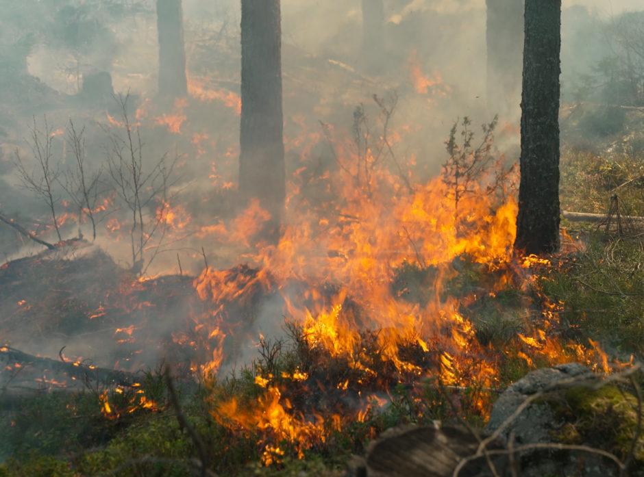 Den nye metoden å beregne skogbrannfare på kan gjøre at faren for skogbrann varsles raskere.