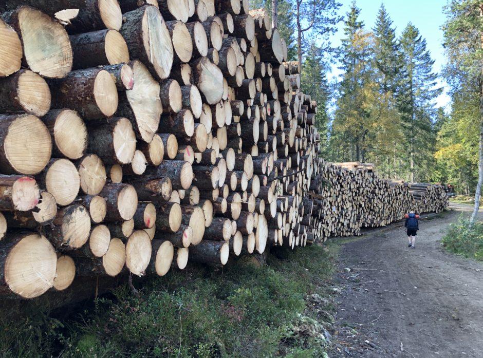 Det nærmer seg valg. Sett deg inn i hva hvert parti mener om skogbruket.