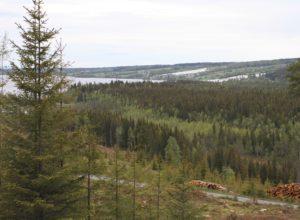 Rekordmye skog i Norge