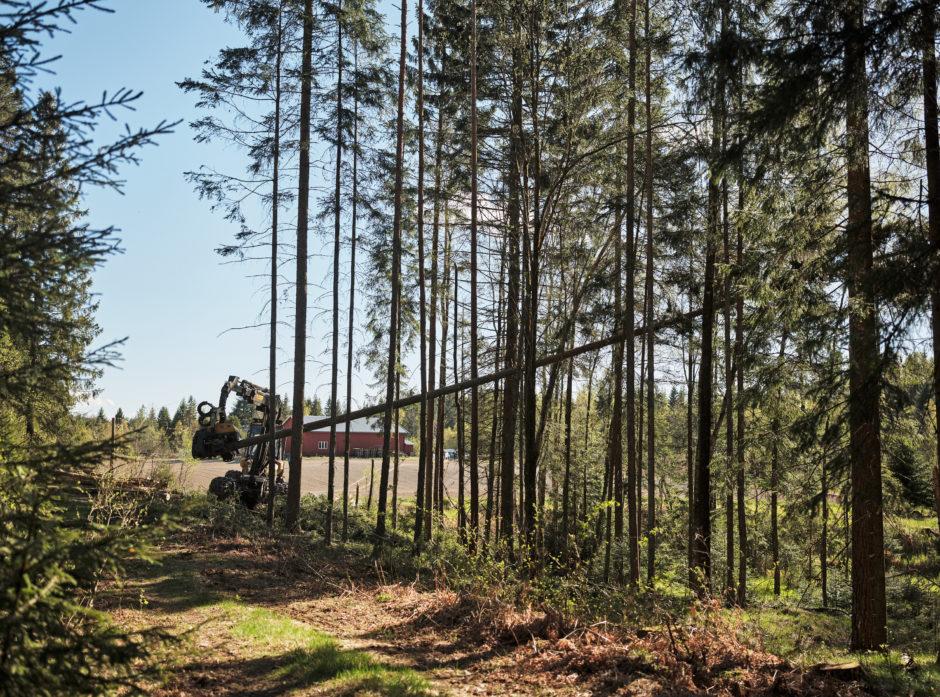 Prinsippet «frihet under ansvar» er nedfelt i skogbruksloven, og styrende for skogeiernes forvaltning av egen eiendom.