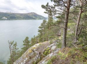 Stort ansvar for norsk kystskog