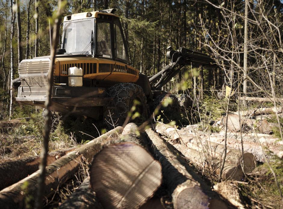 I forslaget til statsbudsjett for 2022 legges det opp til store kutt for norsk skogbruk.